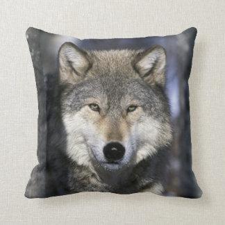 North America, USA, Minnesota. Wolf Canis Pillow