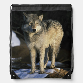 North America USA Minnesota Wolf Canis Backpacks