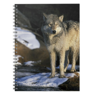 North America, USA, Minnesota. Wolf (Canis Spiral Note Book