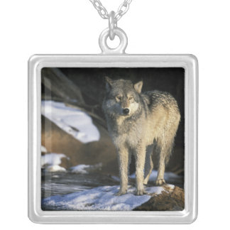 North America, USA, Minnesota. Wolf (Canis Square Pendant Necklace