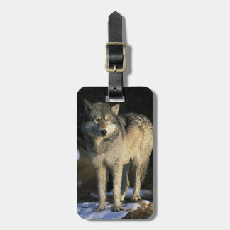 North America, USA, Minnesota. Wolf (Canis Tag For Luggage