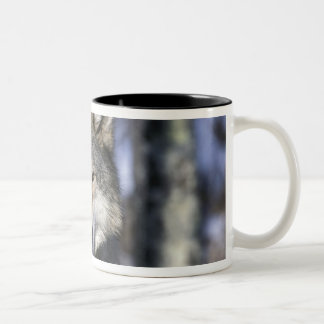 North America, USA, Minnesota. Wolf Canis Two-Tone Coffee Mug