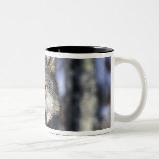 North America, USA, Minnesota. Wolf Canis Two-Tone Coffee Mug