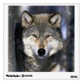 North America, USA, Minnesota. Wolf Canis Wall Decal