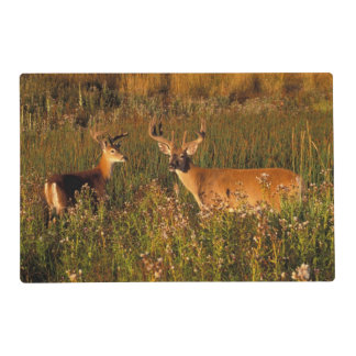North America, USA, Montana, National Bison Placemat
