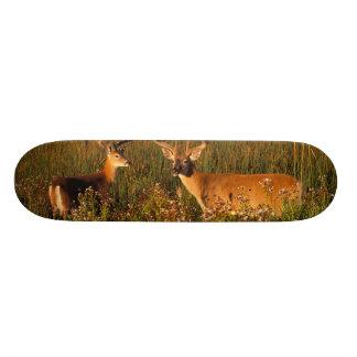 North America, USA, Montana, National Bison Skateboard