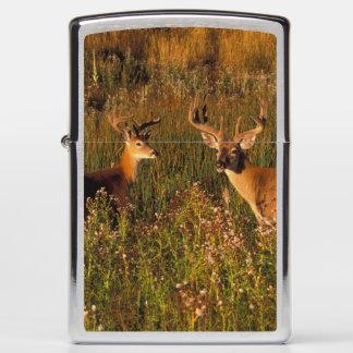 North America, USA, Montana, National Bison Zippo Lighter