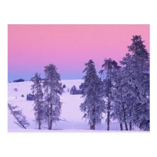 North America, USA, Montana, Yellowstone Postcard