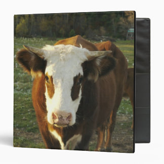 North America, USA, New Hampshire. A bull on Binders