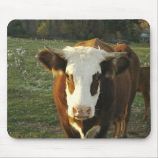 North America, USA, New Hampshire. A bull on Mouse Pad