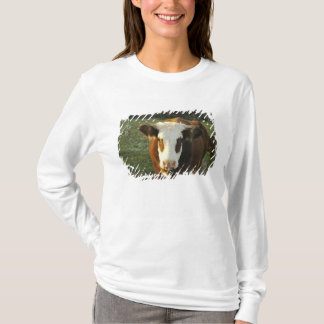 North America, USA, New Hampshire. A bull on T-Shirt
