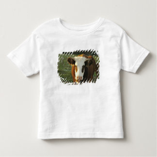 North America, USA, New Hampshire. A bull on Toddler T-shirt