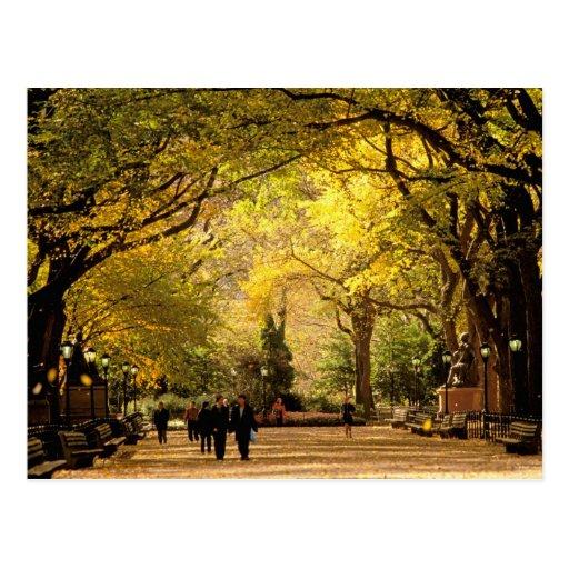 North America, USA, New York, New York City. 12 Postcard