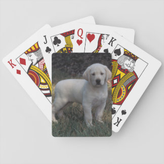 North America, USA, North Carolina. Laborador Playing Cards