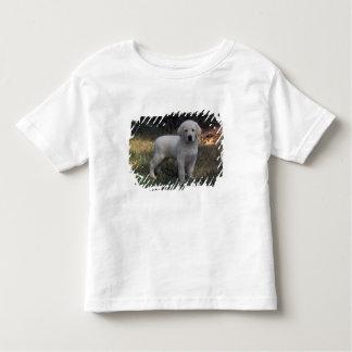 North America, USA, North Carolina. Laborador Toddler T-shirt
