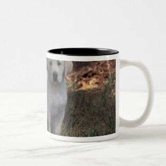 North America, USA, North Carolina. Laborador Two-Tone Coffee Mug
