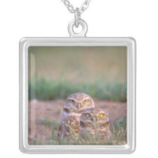 North America, USA, Oregon. Burrowing Owls 2 Silver Plated Necklace