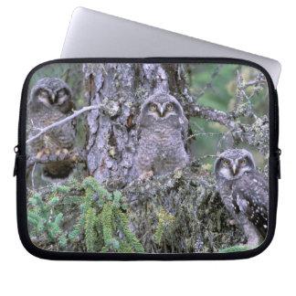 North America, USA, Oregon. Burrowing Owls 3 Laptop Computer Sleeves