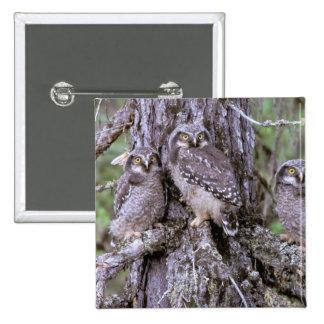 North America, USA, Oregon. Burrowing Owls Pinback Button