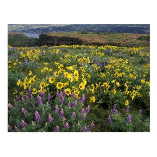 North America, USA, Oregon, Columbia River 2 Postcard