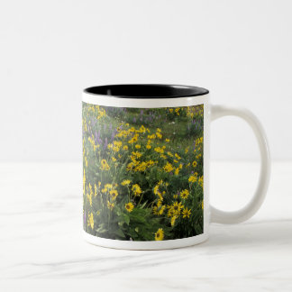 North America, USA, Oregon, Columbia River 2 Two-Tone Coffee Mug