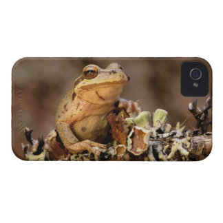 North America, USA, Oregon, Umatilla National iPhone 4 Case-Mate Case