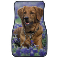 North America, USA, Texas. Golden Retriever in Car Mat