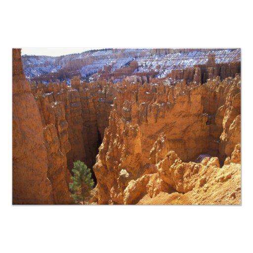 North America, USA, Utah, Bryce Canyon Photographic Print