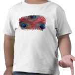 North America, USA, WA, Redmond, Peacock Tshirt