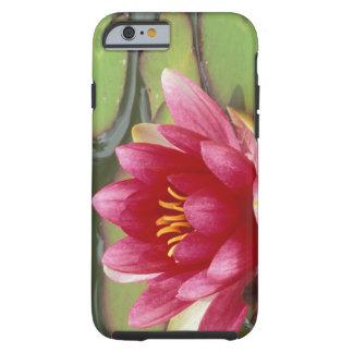 North America, USA, WA, Seattle, Woodland Park 2 iPhone 6 Case