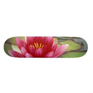 North America, USA, WA, Seattle, Woodland Park 2 Skateboard
