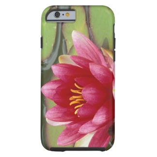 North America, USA, WA, Seattle, Woodland Park 2 Tough iPhone 6 Case