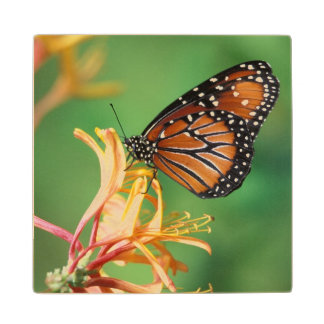 North America, USA, WA, Seattle, Woodland Park Wood Coaster