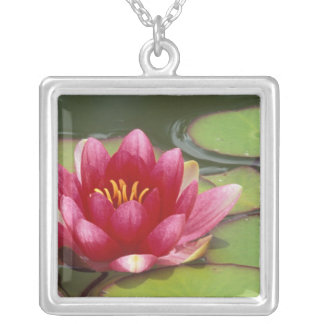 North America, USA, WA, Seattle, Woodland Park Silver Plated Necklace
