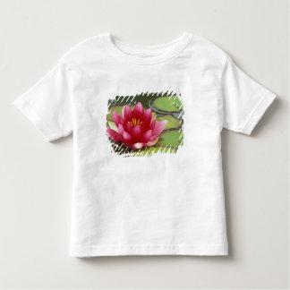 North America, USA, WA, Seattle, Woodland Park Toddler T-shirt