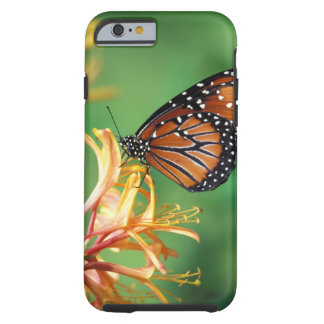 North America, USA, WA, Seattle, Woodland Park Tough iPhone 6 Case