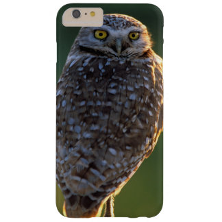 North America; USA; Washington, Burrowing Owl Barely There iPhone 6 Plus Case