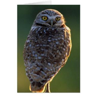 North America; USA; Washington, Burrowing Owl Card
