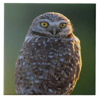 North America; USA; Washington, Burrowing Owl Ceramic Tile