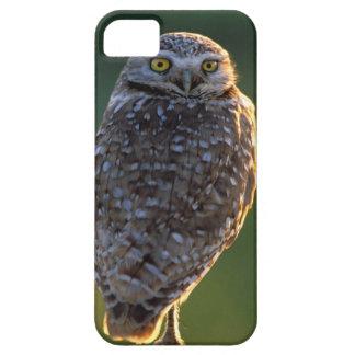 North America; USA; Washington, Burrowing Owl iPhone SE/5/5s Case