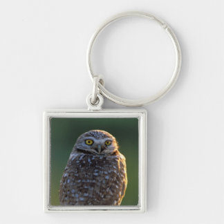 North America; USA; Washington, Burrowing Owl Keychain
