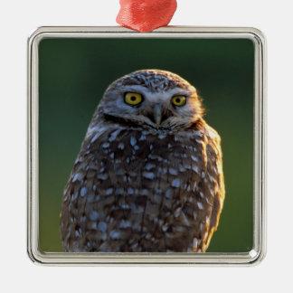 North America; USA; Washington, Burrowing Owl Metal Ornament