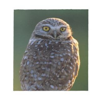 North America; USA; Washington, Burrowing Owl Notepad