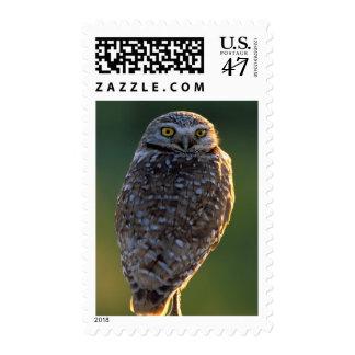 North America; USA; Washington, Burrowing Owl Postage