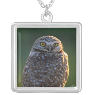 North America; USA; Washington, Burrowing Owl Silver Plated Necklace