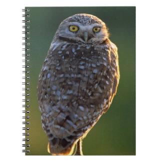 North America; USA; Washington, Burrowing Owl Spiral Notebook