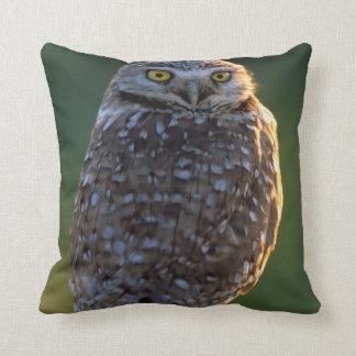 North America; USA; Washington, Burrowing Owl Throw Pillow