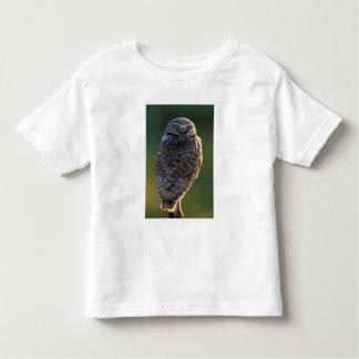 North America; USA; Washington, Burrowing Owl Toddler T-shirt