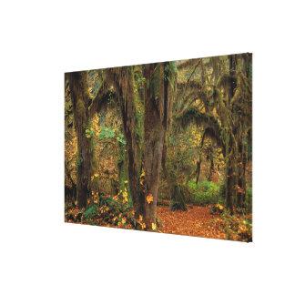 North America; USA; Washington, Moss-Covered Canvas Print