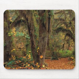 North America; USA; Washington, Moss-Covered Mouse Pad